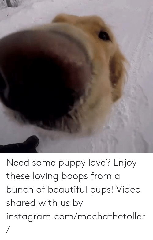 Need Some Puppy Love? Enjoy These Loving Boops From a Bunch of