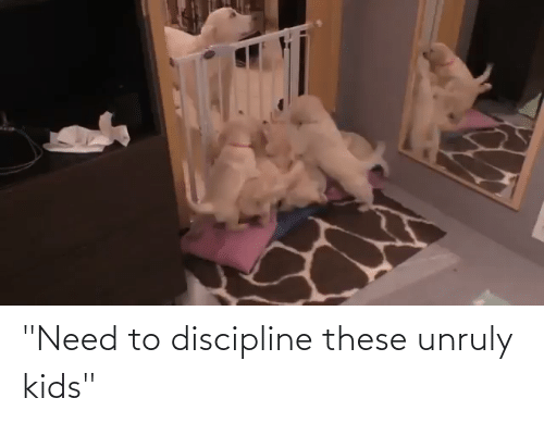 """Kids, Discipline, and  Need: """"Need to discipline these unruly kids"""""""