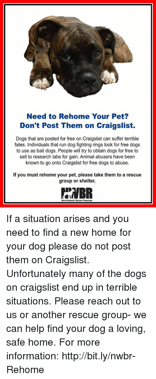 Need to Rehome Your Pet? Don't Post Them on Craigslist Dogs