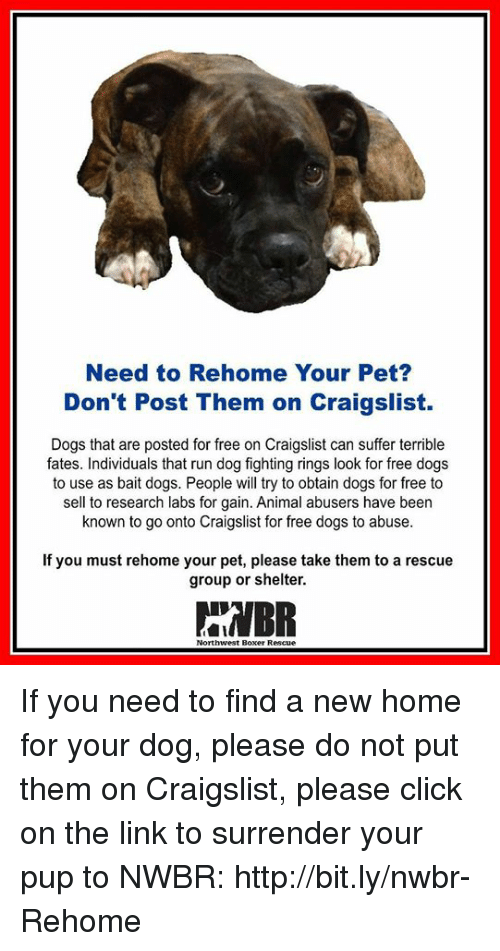 Need To Rehome Your Pet Dont Post Them On Craigslist Dogs That Are