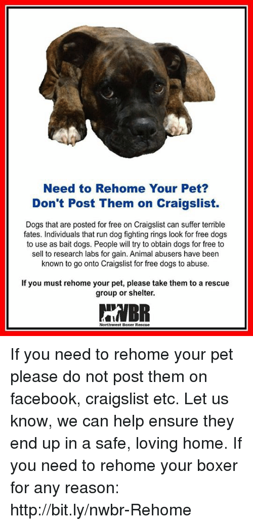 Need to Rehome Your Pet? Don't Post Them on Craigslist Dogs That Are