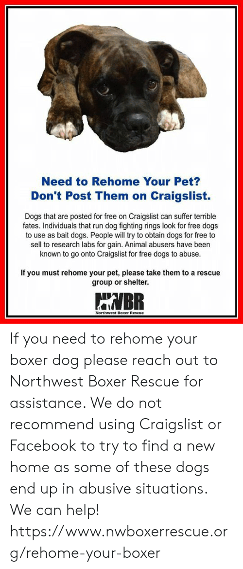 Need To Rehome Your Pet Don T Post Them On Craigslist Dogs