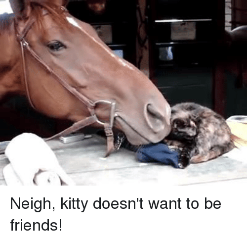 neigh kitty doesnt want to be friends 7297425 watch me whip watch me neigh neigh horse meme,me best of the funny meme