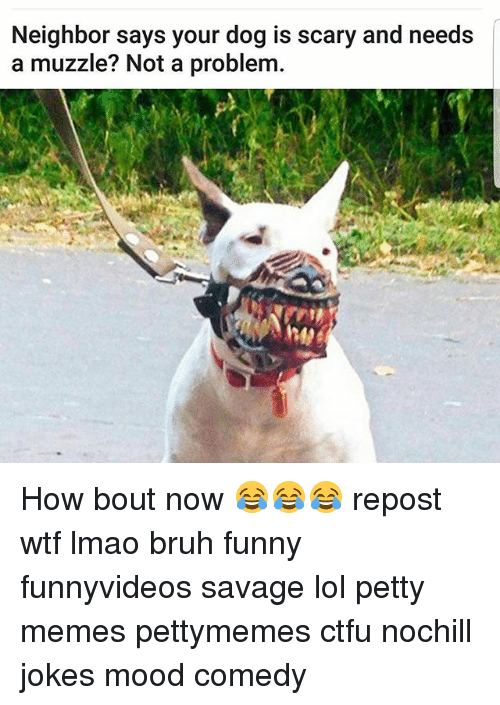 Bruh, Ctfu, and Funny: Neighbor says your dog is scary and needs  a muzzle? Not a problem. How bout now 😂😂😂 repost wtf lmao bruh funny funnyvideos savage lol petty memes pettymemes ctfu nochill jokes mood comedy