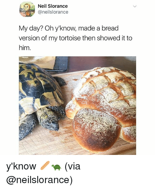 Memes, 🤖, and Bread: Neil Slorance  @neilslorance  My day? Oh y'know, made a bread  version of my tortoise then showed it to  him y'know 🥖🐢 (via @neilslorance)