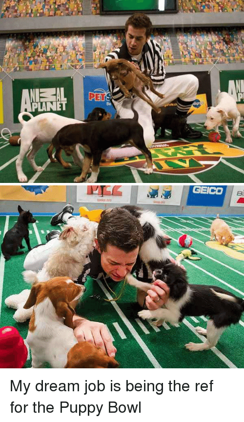 nel al pers planet geico my dream job is being the 2257214 25 best puppy bowl memes jobbing memes, my dreams memes, to do
