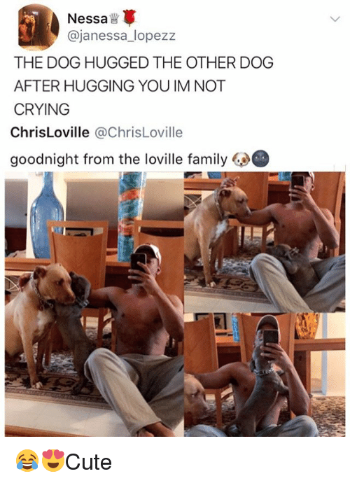 Crying, Family, and Memes: Nessa  @janessa_lopezz  THE DOG HUGGED THE OTHER DOG  AFTER HUGGING YOU IM NOT  CRYING  ChrisLoville @ChrisLoville  goodnight from the loville family 😂😍Cute