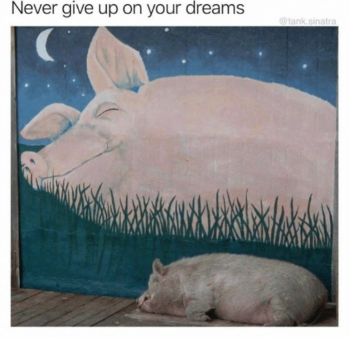 Dreams, Never, and Tank: Never  give  up on your dreams  @tank.sinatra
