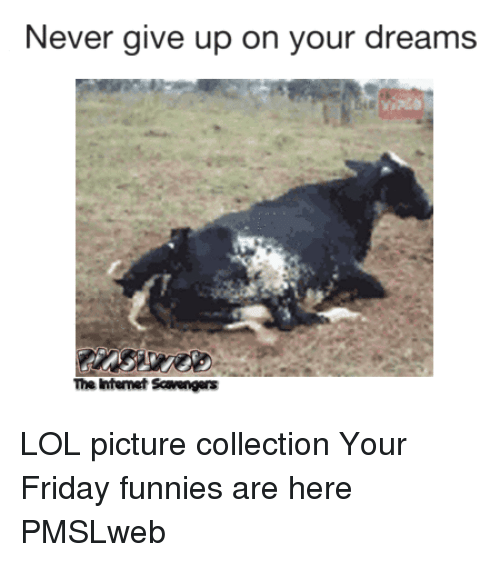 Friday, Lol, and Dreams: Never give up on your dreams  The Intemet Scavengers <p>LOL picture collection  Your Friday funnies are here  PMSLweb </p>