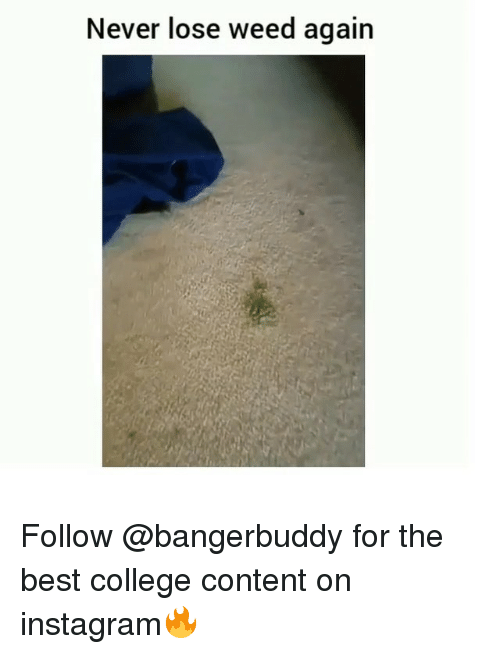 College, Instagram, and Weed: Never lose weed again Follow @bangerbuddy for the best college content on instagram🔥