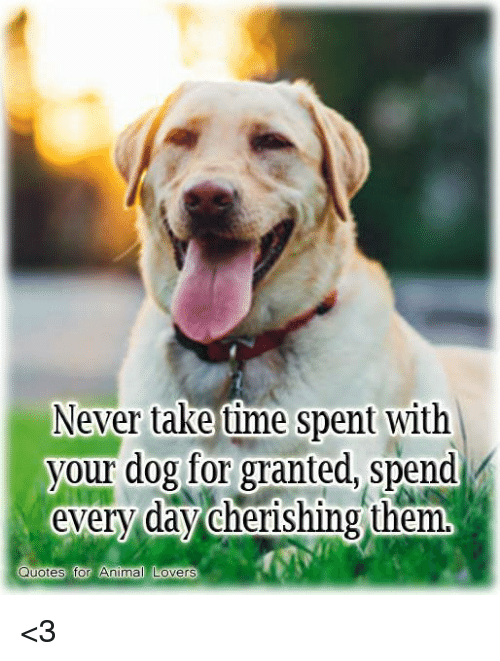 Never Take Time Spent With Your Dog For Granted Spend Every Day