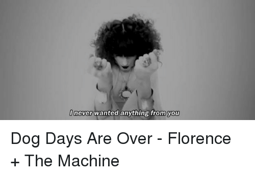 Never Wanted Anything From You Dog Days Are Over Florence The
