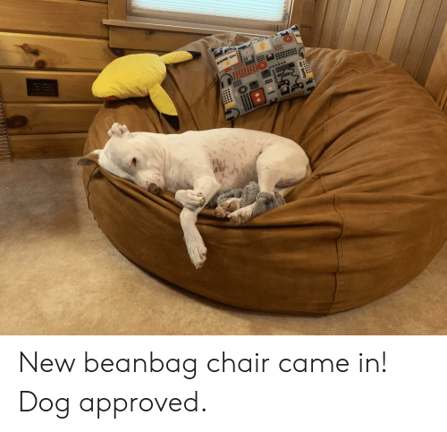 Remarkable New Beanbag Chair Came In Dog Approved Chair Meme On Me Me Camellatalisay Diy Chair Ideas Camellatalisaycom
