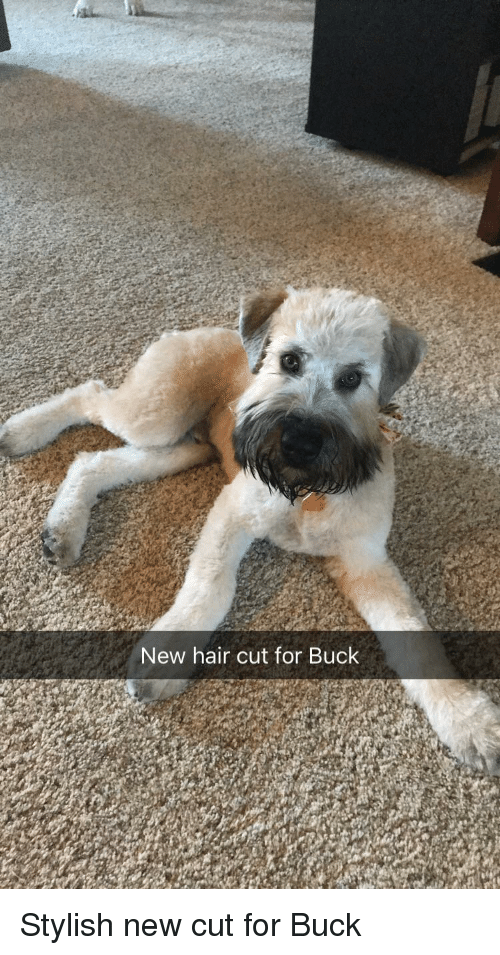 Hair, Stylish, and New: New hair cut for Buck