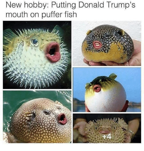Dank, 🤖, and Puffer Fish: New hobby: Putting Donald Trump's  mouth on puffer fish