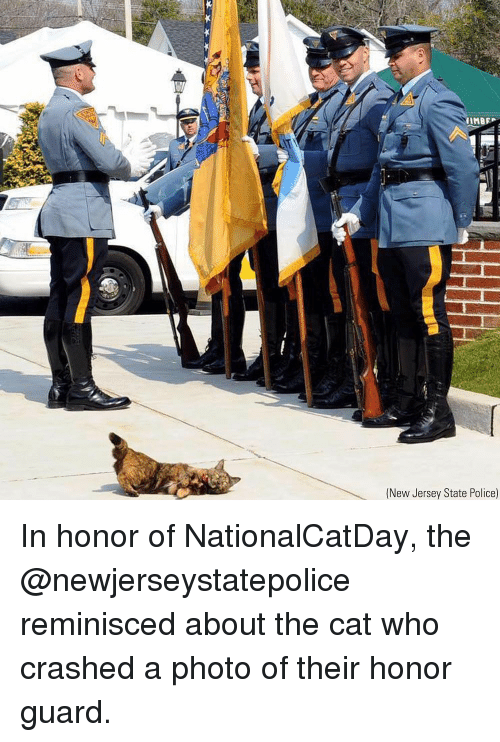 Memes, Police, and New Jersey: (New Jersey State Police) In honor of NationalCatDay, the @newjerseystatepolice reminisced about the cat who crashed a photo of their honor guard.