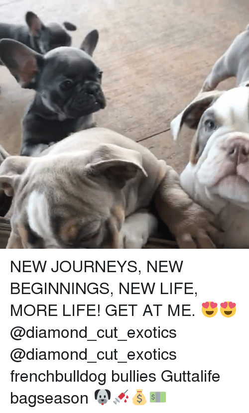 Life, Memes, and Diamond: NEW JOURNEYS, NEW BEGINNINGS, NEW LIFE, MORE LIFE! GET AT ME. 😍😍@diamond_cut_exotics @diamond_cut_exotics frenchbulldog bullies Guttalife bagseason 🐶💉💰💵
