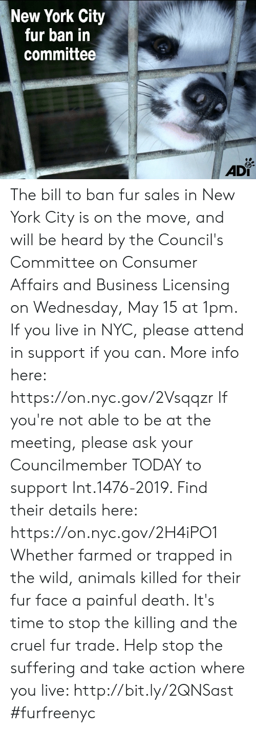 Animals, Memes, and New York: New York City  fur ban in  committee  AD The bill to ban fur sales in New York City is on the move, and will be heard by the Council's Committee on Consumer Affairs and Business Licensing on Wednesday, May 15 at 1pm. If you live in NYC, please attend in support if you can. More info here: https://on.nyc.gov/2Vsqqzr  If you're not able to be at the meeting, please ask your Councilmember TODAY to support Int.1476-2019. Find their details here: https://on.nyc.gov/2H4iPO1  Whether farmed or trapped in the wild, animals killed for their fur face a painful death. It's time to stop the killing and the cruel fur trade.   Help stop the suffering and take action where you live: http://bit.ly/2QNSast  #furfreenyc