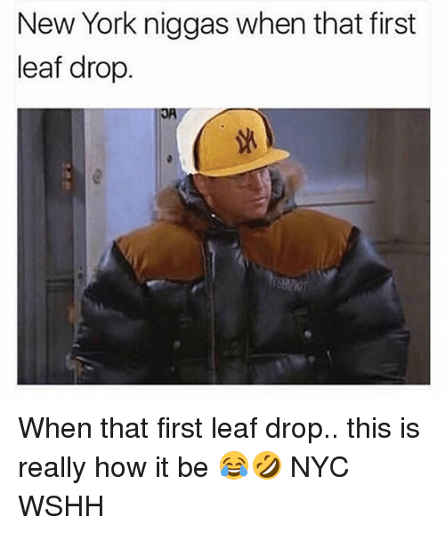 new york niggas when that first leaf drop when that 28202995 ✅ 25 best memes about new york niggas new york niggas memes,Memes Nyc
