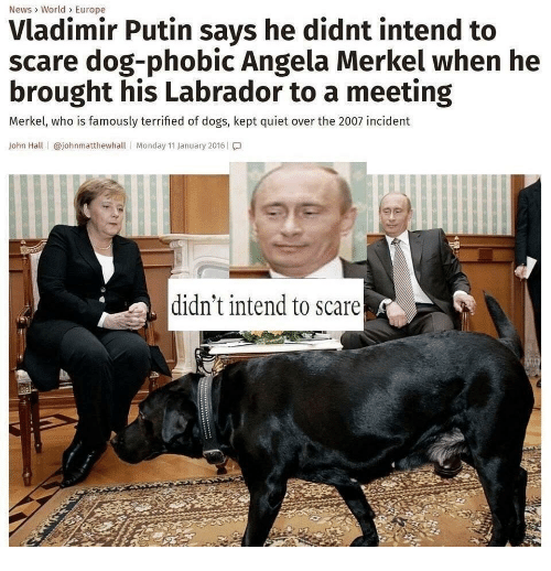 Dogs, News, and Scare: News> World> Europe  Vladimir Putin says he didnt intend to  scare dog-phobic Angela Merkel when he  brought his Labrador to a meeting  Merkel, who is famously terrified of dogs, kept quiet over the 2007 incident  John Hall | @johnmatthewhall | Monday 11 January 2016 | โ.]  didn't intend to scare