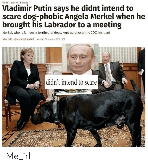 Dogs, News, and Scare: News> World> Europe  Vladimir Putin says he didnt intend to  scare dog-phobic Angela Merkel when he  brought his Labrador to a meeting  Merkel, who is famously terrified of dogs, kept quiet over the 2007 incident  John Hall @johnmatthewhall  Monday 11 January 2016  didn't intend to scare Me_irl