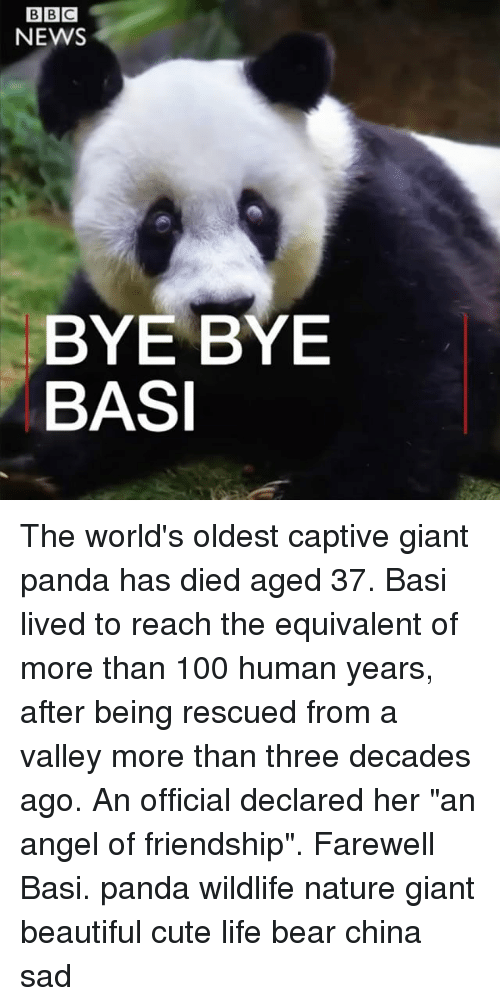 "Anaconda, Beautiful, and Cute: NEWS  BYE BYE  BASI The world's oldest captive giant panda has died aged 37. Basi lived to reach the equivalent of more than 100 human years, after being rescued from a valley more than three decades ago. An official declared her ""an angel of friendship"". Farewell Basi. panda wildlife nature giant beautiful cute life bear china sad"