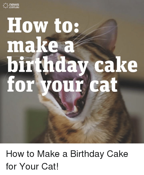 Birthday Memes And Cake News Au How To Make A For Your Cat