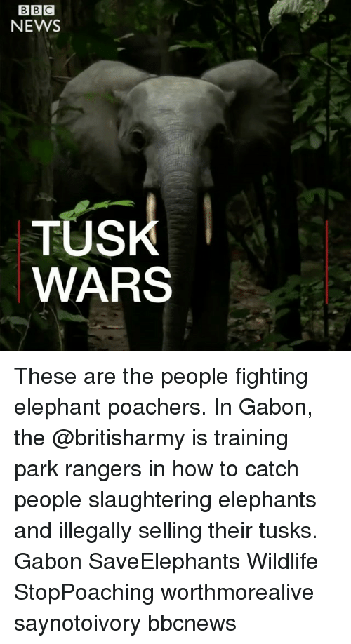 Memes, News, and Elephant: NEWS  TUS  WARS These are the people fighting elephant poachers. In Gabon, the @britisharmy is training park rangers in how to catch people slaughtering elephants and illegally selling their tusks. Gabon SaveElephants Wildlife StopPoaching worthmorealive saynotoivory bbcnews