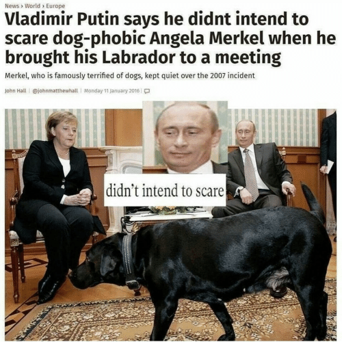 Dogs, News, and Scare: News World Europe  Vladimir Putin says he didnt intend to  scare dog-phobic Angela Merkel when he  brought his Labrador to a meeting  Merkel, who is famously terrified of dogs, kept quiet over the 2007 incident  John Hall @johnmatthewhall Monday 11 January 2016  didn't intend to scare