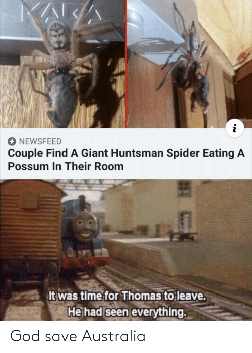God, Spider, and Australia: NEWSFEED  Couple Find A Giant Huntsman Spider Eating A  Possum In Their Room  It was time for Thomas to leave.  He had seen everything. God save Australia