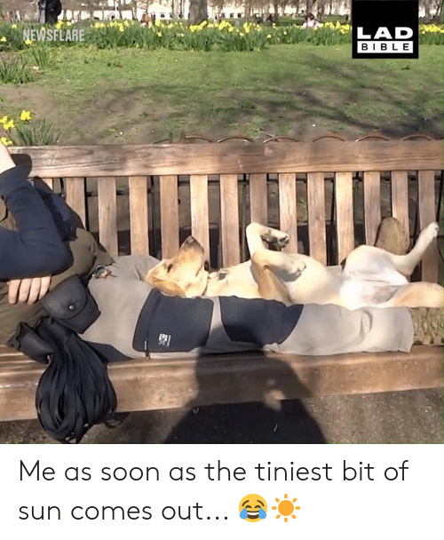 Dank, Soon..., and Bible: NEWSFLARE  BIBLE Me as soon as the tiniest bit of sun comes out... 😂☀