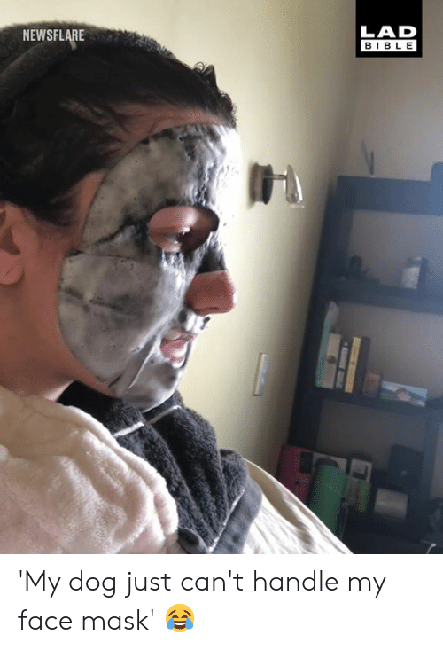 Dank, Bible, and Mask: NEWSFLARE  LAD  BIBLE 'My dog just can't handle my face mask' 😂