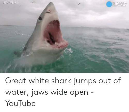 NEWSFLARE USATODAY Great White Shark Jumps Out of Water Jaws