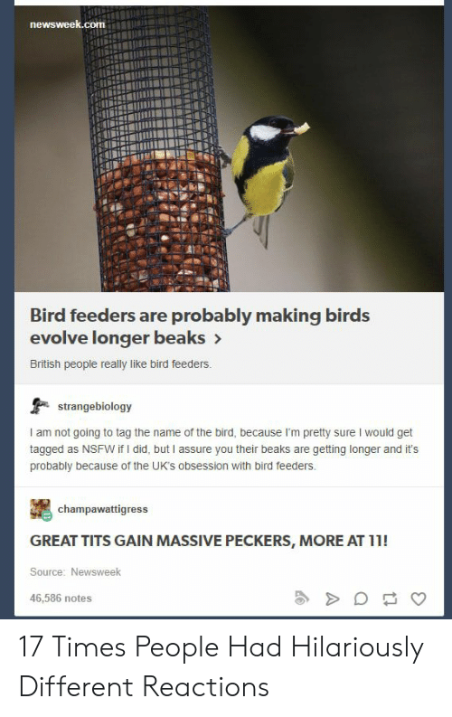 Nsfw, Tits, and Birds: newsweek.com  Bird feeders are probably making birds  evolve longer beaks>  British people really like bird feeders.  strangebiology  I am not going to tag the name of the bird, because I'm pretty sure I would get  tagged as NSFW if I did, but I assure you their beaks are getting longer and it's  probably because of the UK's obsession with bird feeders.  champawattigress  GREAT TITS GAIN MASSIVE PECKERS, MORE AT 11!  Source: Newsweek  46,586 notes 17 Times People Had Hilariously Different Reactions