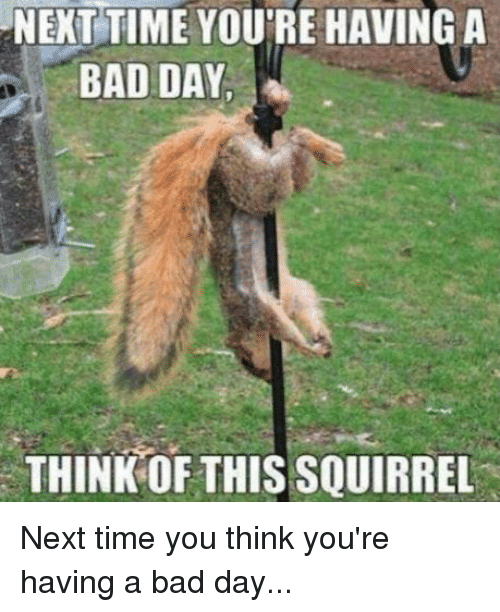 Funny Memes For Having A Bad Day : Next time you re having a bad day think of this squirrel