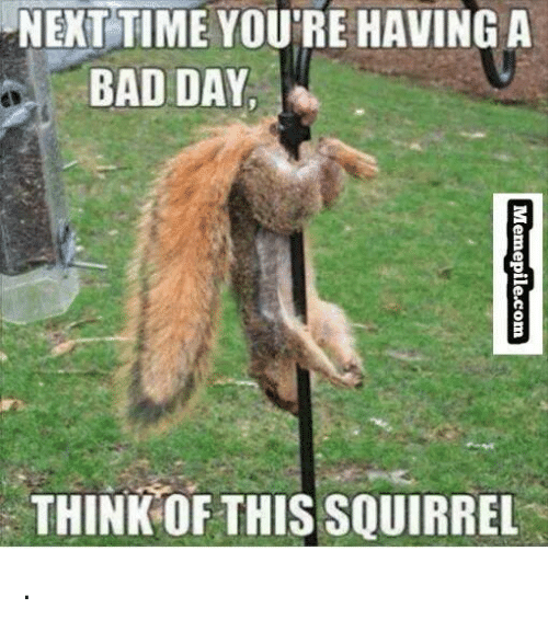 Funny Memes For Meme Day : Next time you re having a bad day think this squirrel