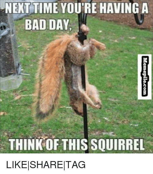 Next Time Youre Having A Bad Day Think This Squirrel Likesharetag