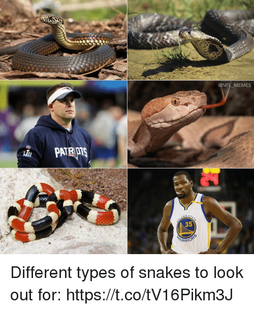 Memes, Nfl, and Snakes: @NFL MEMES  35  ARRIO Different types of snakes to look out for: https://t.co/tV16Pikm3J