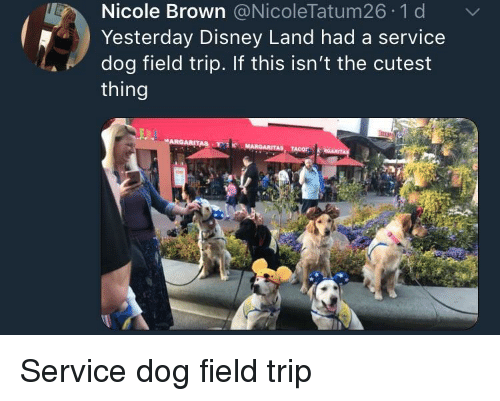 Disney, Field Trip, and Dog: Nicole Brown @NicoleTatum26 1 d  Yesterday Disney Land had a service  dog field trip. If this isn't the cutest  thing <p>Service dog field trip</p>