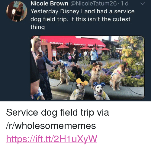 """Disney, Field Trip, and Dog: Nicole Brown @NicoleTatum26 1 d  Yesterday Disney Land had a service  dog field trip. If this isn't the cutest  thing <p>Service dog field trip via /r/wholesomememes <a href=""""https://ift.tt/2H1uXyW"""">https://ift.tt/2H1uXyW</a></p>"""