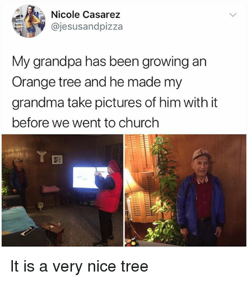 Church, Grandma, and Memes: Nicole Casarez  @jesusandpizza  My grandpa has been growing an  Orange tree and he made my  grandma take pictures of him with it  before we went to church  ㄚ囝 It is a very nice tree