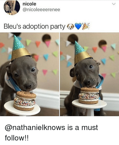 Memes, Party, and 🤖: nicole  @nicoleeeerenee  Bleu's adoption party 6.0 @nathanielknows is a must follow!!