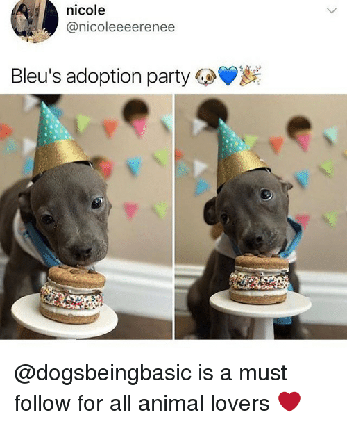 Memes, Party, and Animal: nicole  @nicoleeeerenee  Bleu's adoption party @dogsbeingbasic is a must follow for all animal lovers ❤️
