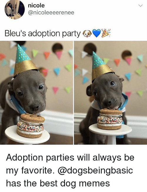 Funny, Memes, and Party: nicole  @nicoleeeerenee  Bleu's adoption party  GeVi Adoption parties will always be my favorite. @dogsbeingbasic has the best dog memes