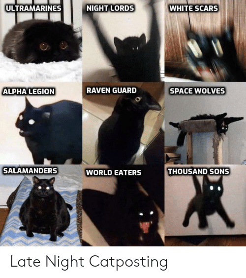 Raven, Space, and White: NIGHT LORDS  ULTRAMARINES  WHITE SCARS  SPACE WOLVES  ALPHA LEGION  RAVEN GUARD  SALAMANDERS  THOUSAND SONS  WORLD EATERS Late Night Catposting