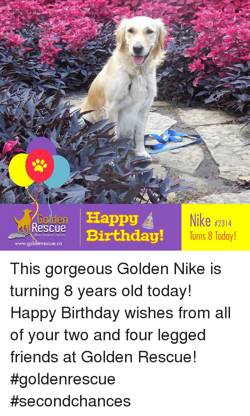 Birthday Friends And Memes Nike 2314 Urns 8 Today Golden Happy Rescue