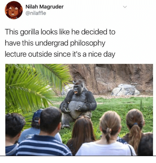 Memes, Philosophy, and Nice: Nilah Magruder  @nilaffle  This gorilla looks like he decided to  have this undergrad philosophy  lecture outside since it's a nice day