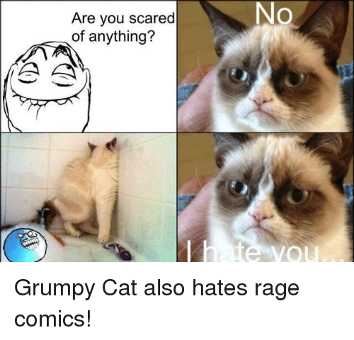 no are you scared of anything grumpy cat also hates 25525048 no are you scared of anything? grumpy cat meme on me me