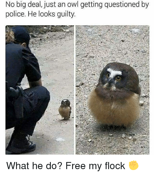 Memes, 🤖, and Owl: No big deal, just an owl getting questioned by  police. He looks guilty What he do? Free my flock ✊