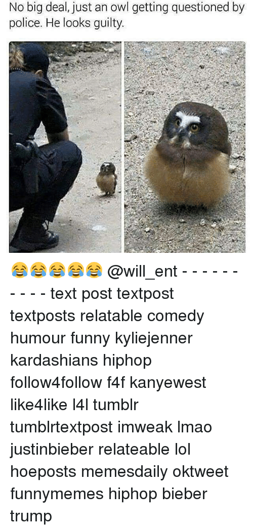 Memes, 🤖, and Owl: No big deal, just an owl getting questioned by  police. He looks guilty. 😂😂😂😂😂 @will_ent - - - - - - - - - - text post textpost textposts relatable comedy humour funny kyliejenner kardashians hiphop follow4follow f4f kanyewest like4like l4l tumblr tumblrtextpost imweak lmao justinbieber relateable lol hoeposts memesdaily oktweet funnymemes hiphop bieber trump